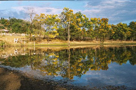 Wollombi Reflections